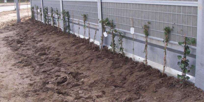 Beplantning (3)